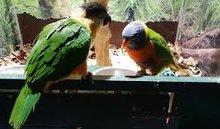 Vogel toebehoren