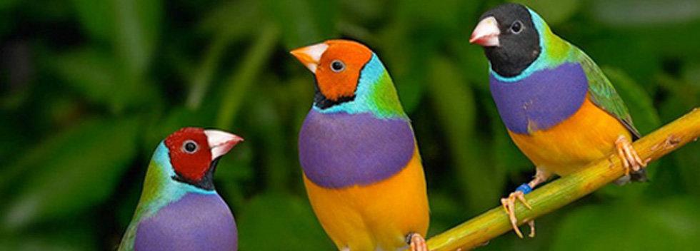 Voor Tropische Vogels